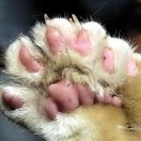 Investigan querella de crueldad contra animales en Carolina