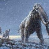 Gracias a los dientes de los mamuts