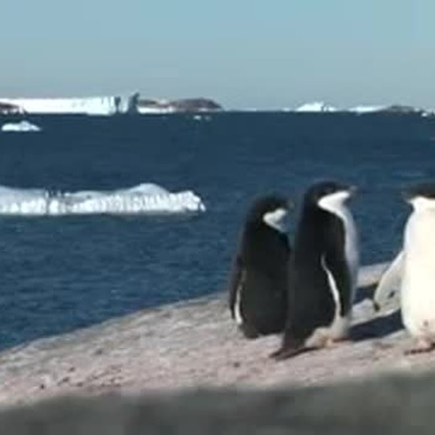 Presentan un gran atlas de vida marina en la Antártida