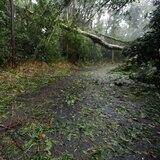 Se registra derrumbe de tierra en barrio La Mesa en Caguas
