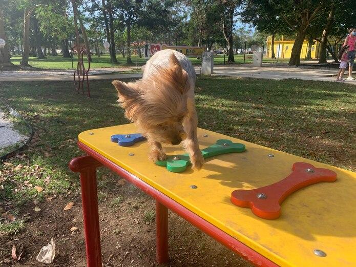 Hay distintas áreas de juego para el disfrute de las mascotas y sus dueños.