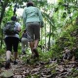 Escalan centro de investigación en bosque Toro Negro en Orocovis