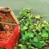 Milagroso rescate de una recién nacida en río de India