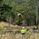 Buscan salvar a los koalas en Australia reforestando con drones