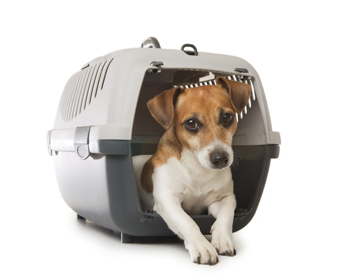 En caso de tener que abandonar el hogar siempre se debe contar con un 'kennel' o maletita donde transportar cada mascota y que a la vez le sirva de cama.