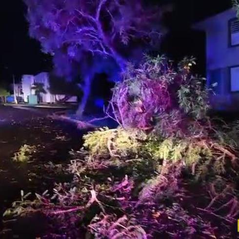 Recogido de ramas y árboles caídos en Arecibo