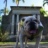 """Fallece la mascota del RUM """"Tarzán XI"""""""