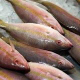 NOAA aprueba fondos para pescadores afectados por el COVID-19 en la Isla