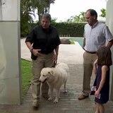 ¿Problemas de comportamiento o conducta típica de un perro protector?