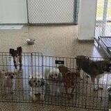 Toy Doggie invita a una corrida a beneficio de perros rescatados