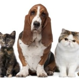Auxilio cameral a un albergue de animales abandonados