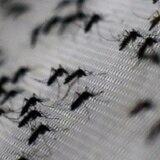 Posible repunte en casos de chikungunya y dengue por aumento de lluvia