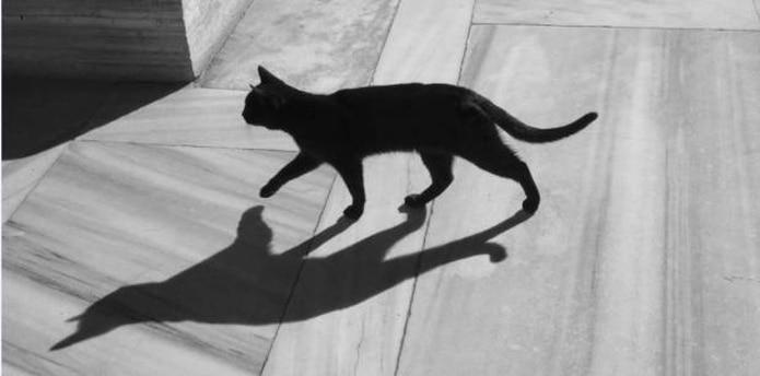 El color negro se produce de forma natural en gatos, así como también en perros, debido al melanismo, que es básicamente lo opuesto al albinismo. (Archivo)
