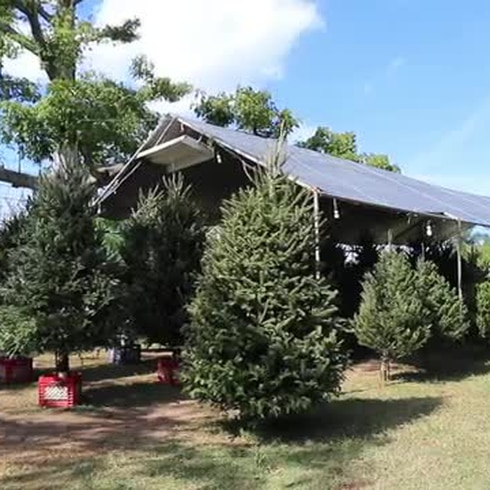 Aún venden árboles de Navidad en Puerto Rico