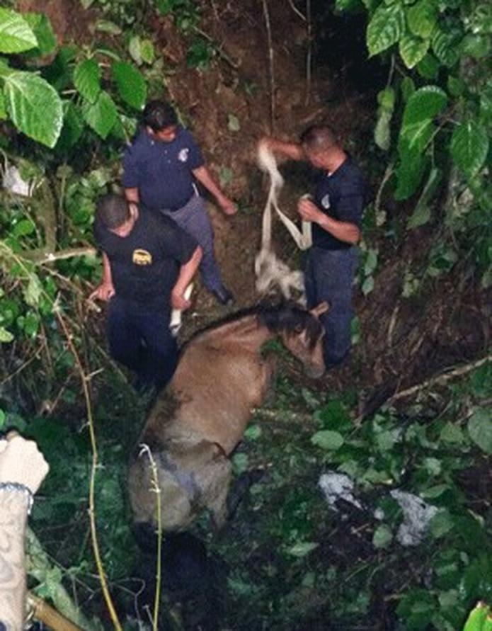 La Oficina de Control de Animales, que dirige José Cruz, participó en las labores de rescate y se hizo cargo de la pesquisa de rigor. (Suministrada)