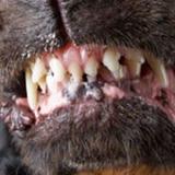 En condición estable niño mordido por un perro en Caimito