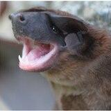 Describen nueva especie de murciélago en los Andes de Colombia, Perú y Ecuador