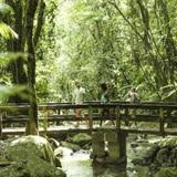 Rescatan a salvo excursionistas extraviados en El Yunque