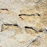 Huellas en Nuevo México evidencian presencia humana en América hace 23,000 años
