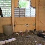 Conceden tiempo adicional para sacar animales de escuela de Mayagüez