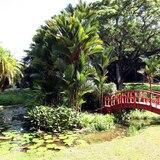 Jardín Botánico en Río Piedras reabre al público