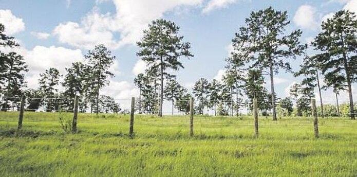 En las 875 cuerdas de terreno que comprenden el refugio hay vegetación, lagos de hasta 15 cuerdas de extensión, manantiales y embalses. No faltan las áreas boscosas. (Carla Martínez/Enviada Especial)