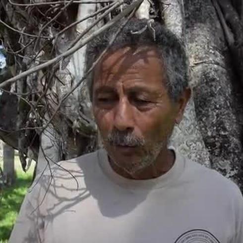 Movimiento para reforestar la UPR