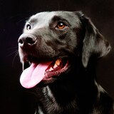 Inician pruebas con perros para detectar coronavirus