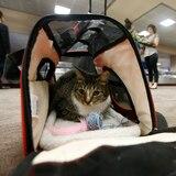 Estados Unidos ajusta reglas para viajar con animales