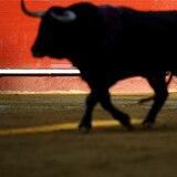 Alcaldía de Quito prohíbe espectáculos con sufrimiento, maltrato o muerte de animales