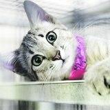 Cuándo y cómo llevar los gatos al veterinario