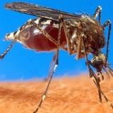 Fallecen tres personas con síntomas de chikungunya