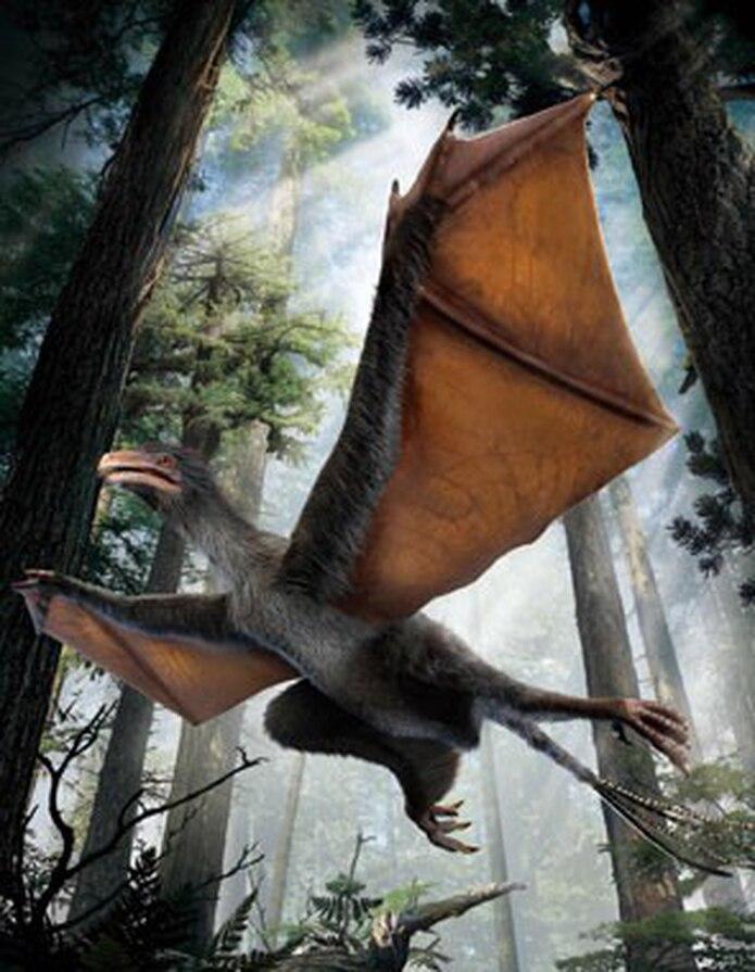 La evidencia de las alas se encontró de unos huesos que se extienden como vigas desde las muñecas. (AP)