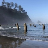 """El """"bosque fantasma"""" que se asoma en una playa de Oregon"""
