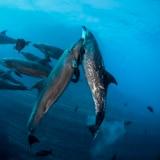 Fotógrafa recorre mundos acuáticos mexicanos para mostrarlos a la humanidad