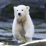 Zoológico alemán anuncia el nombre de su nueva estrella