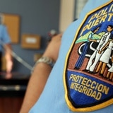 Caballo muere al ser impactado por un auto en Arecibo