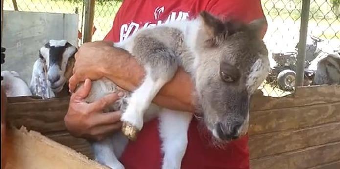 El animal lamentablemente murió a las 4:17 de la tarde del domingo 9 de junio.  (YouTube)