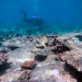 Gran Barrera de Arrecifes afronta nuevo blanqueo masivo