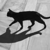 Día para honrar a los gatos negros