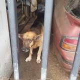 Bajo pesquisa posible caso de maltrato a un perro en Puerto Nuevo