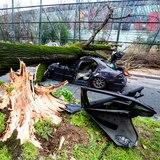 Vientos arrancan árbol y mata a conductor cerca de la Torre Eiffel