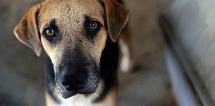 La infección se adquiere por el contacto de la piel con suelos contaminados con material fecal de perros o gatos infectados. (Archivo)