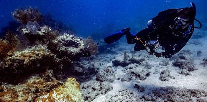 El Programa de Conservación de Arrecifes de Coral de la NOAA tiene como fin proteger, conservar y restaurar los recursos de los arrecifes de coral manteniendo una función saludable del ecosistema. (Archivo)