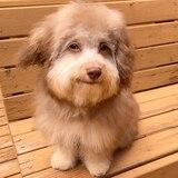 Perro con expresión humana es una celebridad en redes sociales