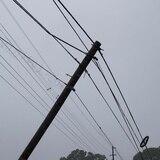 Cierran carretera en Quebradillas por caída de tendido eléctrico