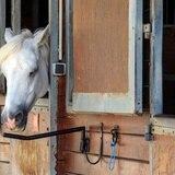 Misteriosas mutilaciones de caballos desconciertan a las autoridades en Francia