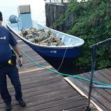 FURA ocupa cargamento millonario de cocaína en playa de Yabucoa