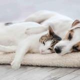Mascotas seguras en la emergencia