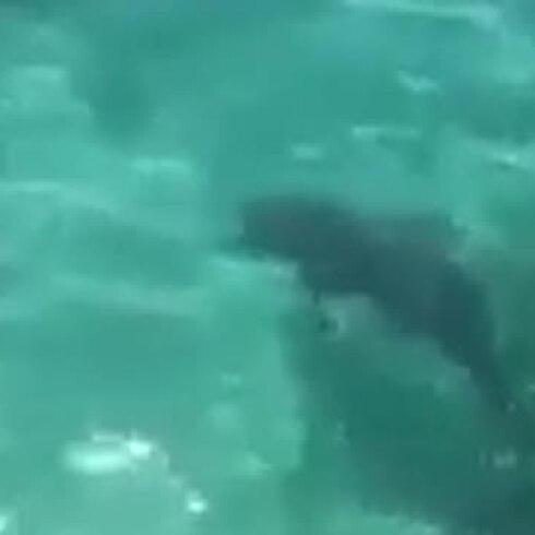 Delfines sorprenden a bañistas en Icacos